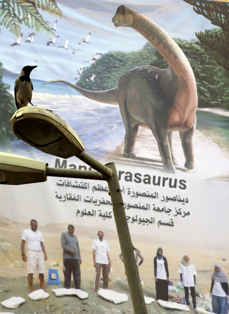 In this Saturday, Feb. 3, 2018 photo, a bird sits on a lamp post in front of a banner that honors a team from Mansoura university for their discovery of a Cretaceous period dinosaur, in Mansoura,  ...