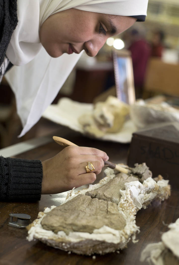 In this Saturday, Feb. 3, 2018 photo, paleontologist Mai el-Amir, who was involved in Mansoura university's excavation of a Cretaceous period dinosaur, works on a bone at a laboratory in Mansoura, ...