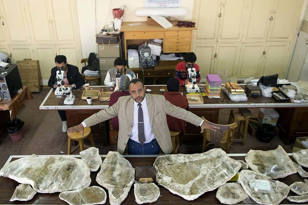 Hesham Sallam, head of Mansoura university's Center for Vertebrate Paleontology, displays bones of a Cretaceous period dinosaur in Mansoura, Egypt. (Amr Nabil/AP)