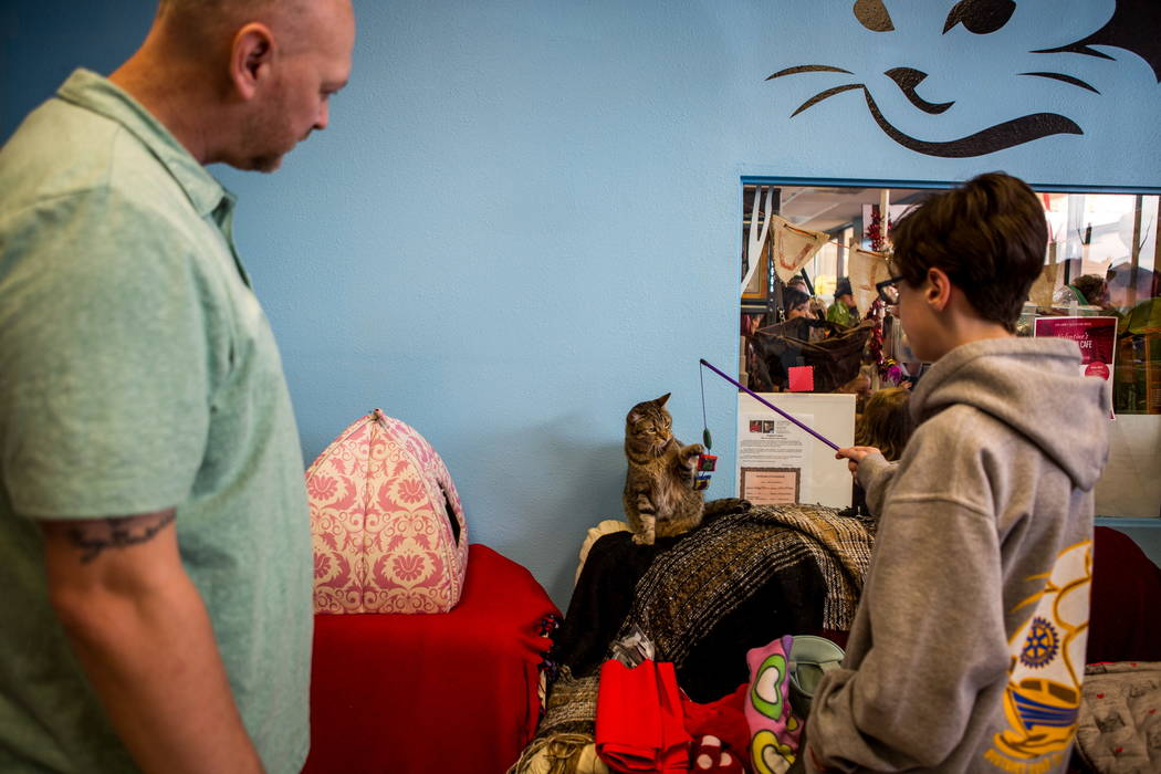 Visitors play with Zena at a pop-up cat cafe at Hearts Alive Village in Las Vegas on Saturday, Feb. 10, 2018.  Patrick Connolly Las Vegas Review-Journal @PConnPie