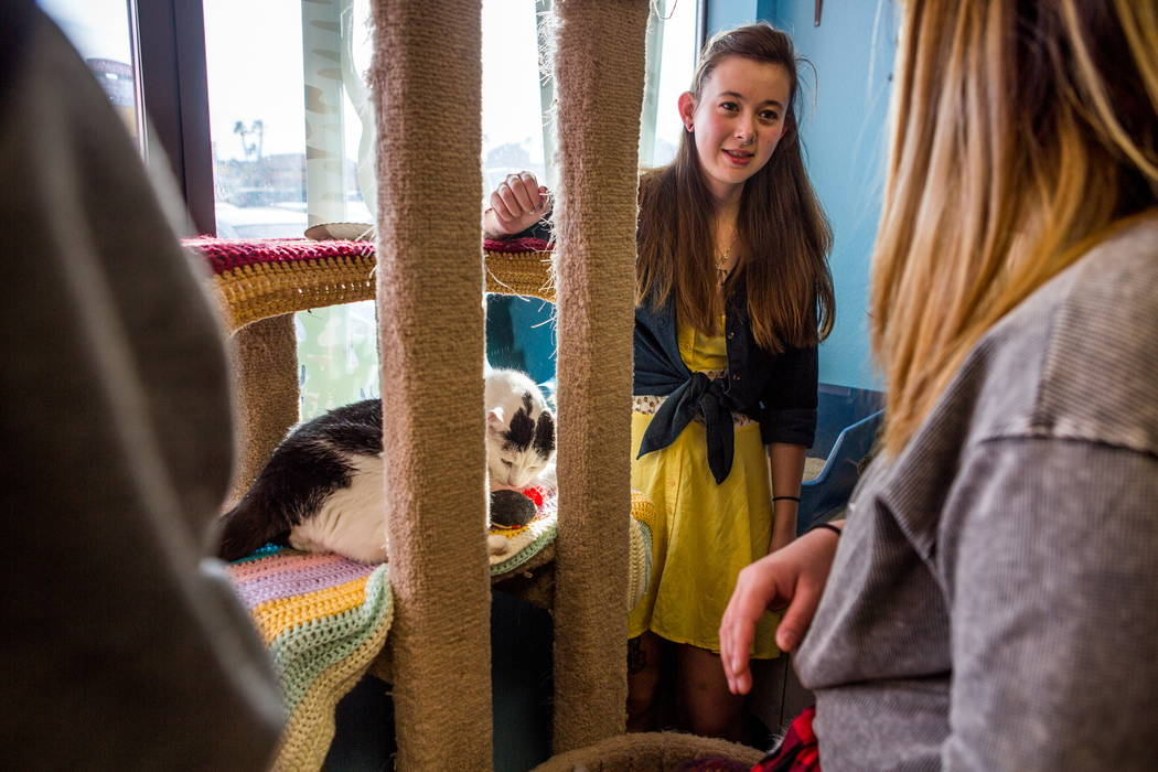 Molly Weiss, center, plays with a cat named Pepe at a pop-up cat cafe at Hearts Alive Village in Las Vegas on Saturday, Feb. 10, 2018.  Patrick Connolly Las Vegas Review-Journal @PConnPie