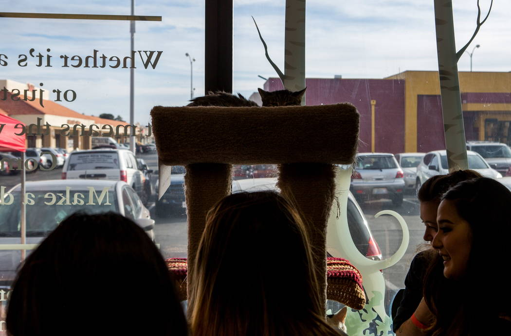 A cat peeks out above visitors to a pop-up cat cafe at Hearts Alive Village in Las Vegas on Saturday, Feb. 10, 2018.  Patrick Connolly Las Vegas Review-Journal @PConnPie