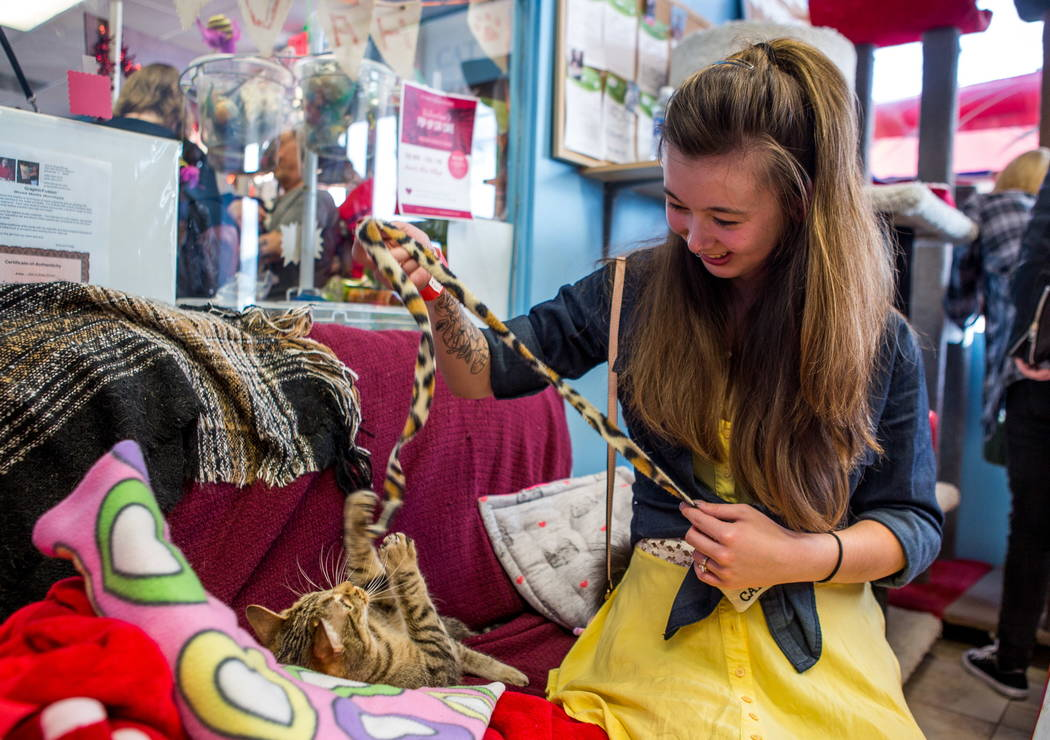 Molly Weiss plays with Zena the cat at a pop-up cat cafe at Hearts Alive Village in Las Vegas on Saturday, Feb. 10, 2018.  Patrick Connolly Las Vegas Review-Journal @PConnPie