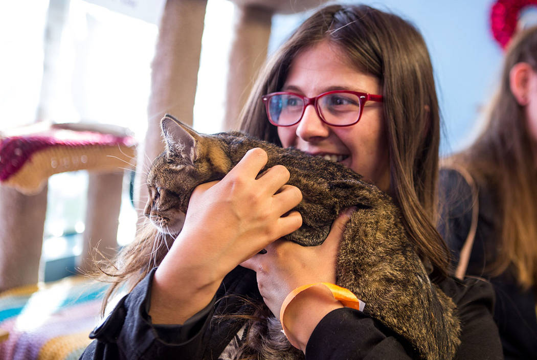 Cricket Carine holds Mia the cat at a pop-up cat cafe at Hearts Alive Village in Las Vegas on Saturday, Feb. 10, 2018.  Patrick Connolly Las Vegas Review-Journal @PConnPie