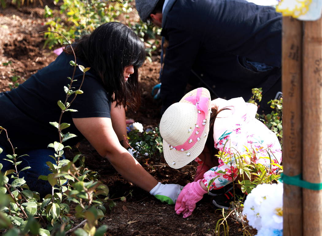 Camila Galeana and her 4-year-old daughter, Aerynne Harcourt, help volunteers plant 10,000 daffodils at the Healing Garden in Las Vegas on Saturday, Feb. 10, 2018. Andrea Cornejo Las Vegas Review- ...