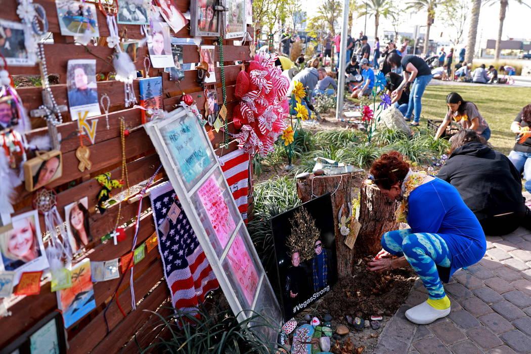 Volunteer Suzanne Kloud of Las Vegas helps plant 10,000 daffodils at the Healing Garden in Las Vegas on Saturday, Feb. 10, 2018. Andrea Cornejo Las Vegas Review-Journal @DreaCornejo