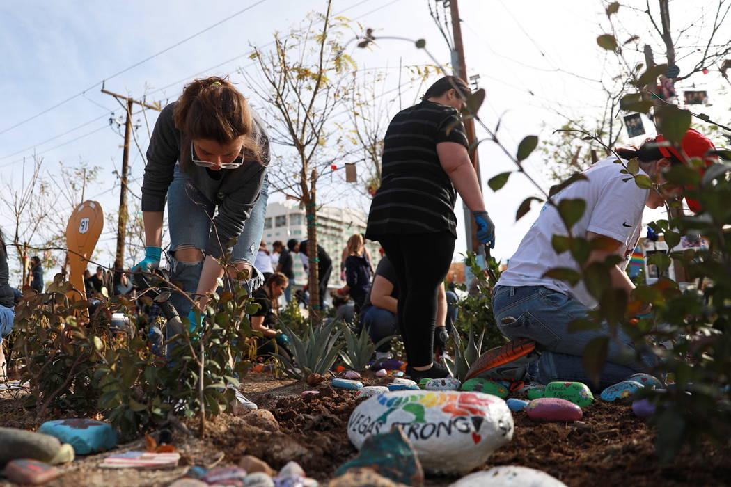Jessy Irvine, 14, helps volunteers plant 10,000 daffodils at the Healing Garden in Las Vegas on Saturday, Feb. 10, 2018. Andrea Cornejo Las Vegas Review-Journal @DreaCornejo