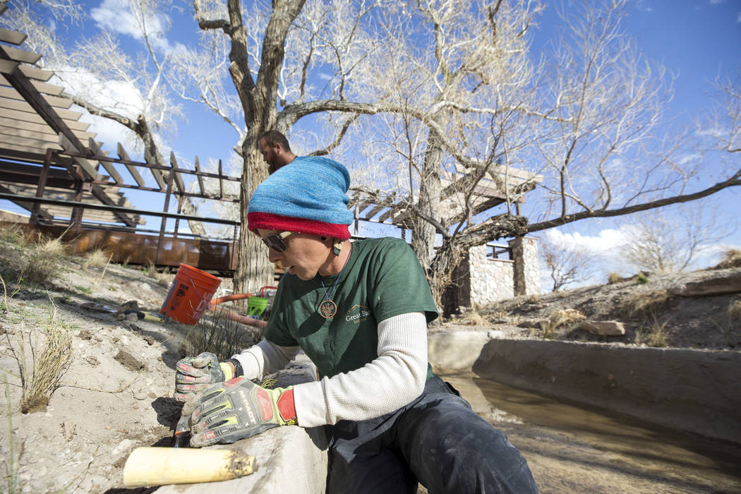 Nevada Conservation Corps volunteer Bri Wischengrad plants a Las Vegas bearpoppy along a stream bed at Springs Preserve's Cottonwood Grove on Monday, Feb. 12, 2018. The vegetation is listed as cri ...