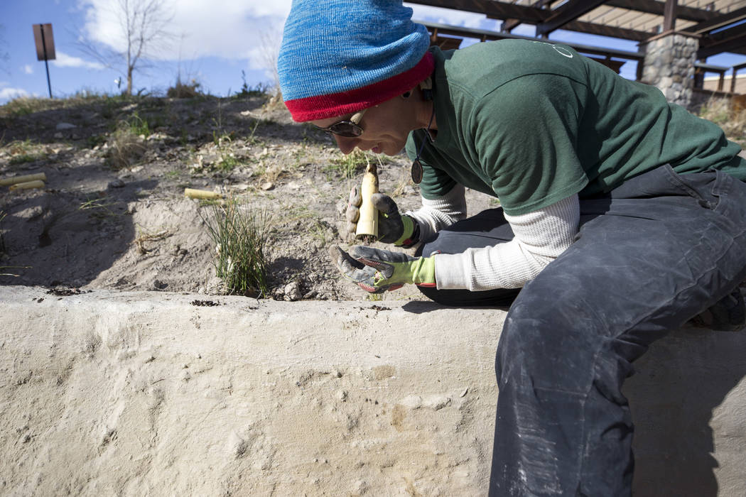 Nevada Conservation Corps volunteer Bri Wischengrad plants native riparian along a stream bed at Springs Preserve's Cottonwood Grove on Monday, Feb. 12, 2018. The vegetation is listed as criticall ...