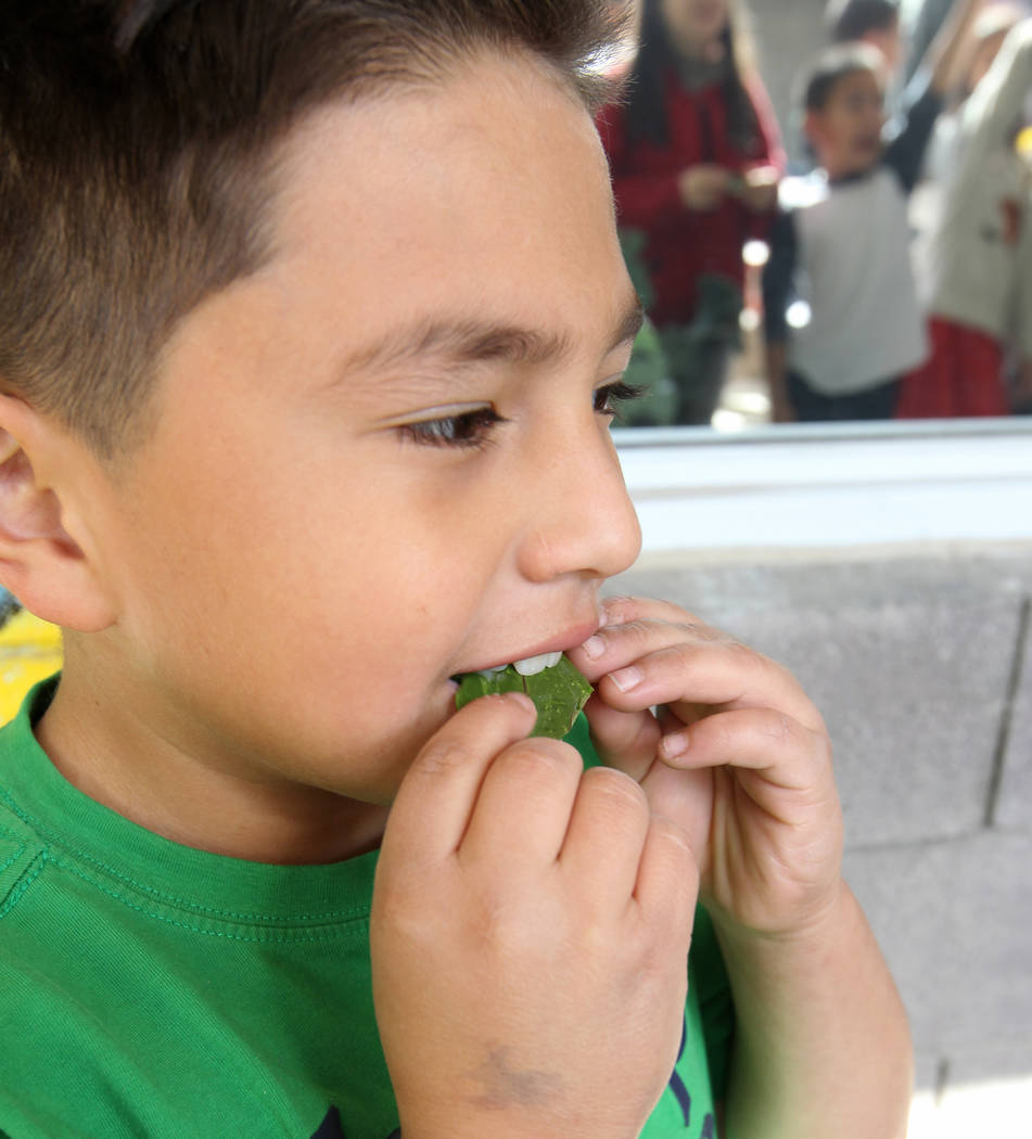 Woolley Elementary School third-grader Aiden Guillermo eats Ruby Red chard grown in the Las Vegas school's garden Monday, Feb. 12, 2018. K.M. Cannon Las Vegas Review-Journal @KMCannonPhoto