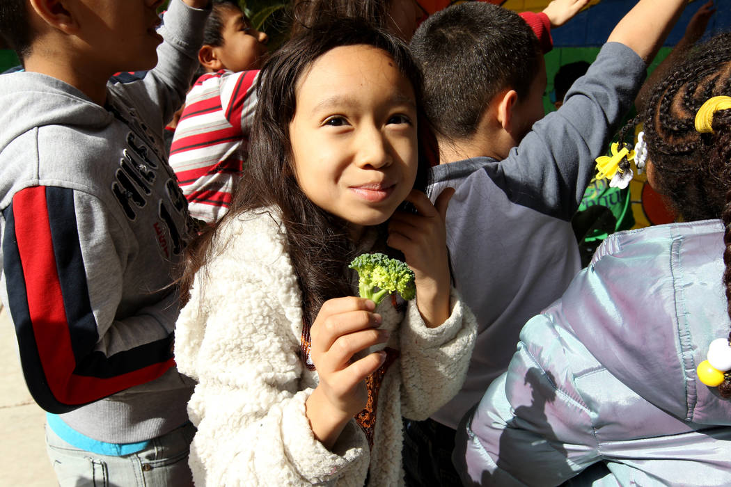 Woolley Elementary School third-grader Taya Delgado-Rith eats broccoli grown in the school's garden in Las Vegas Monday, Feb. 12, 2018. K.M. Cannon Las Vegas Review-Journal @KMCannonPhoto