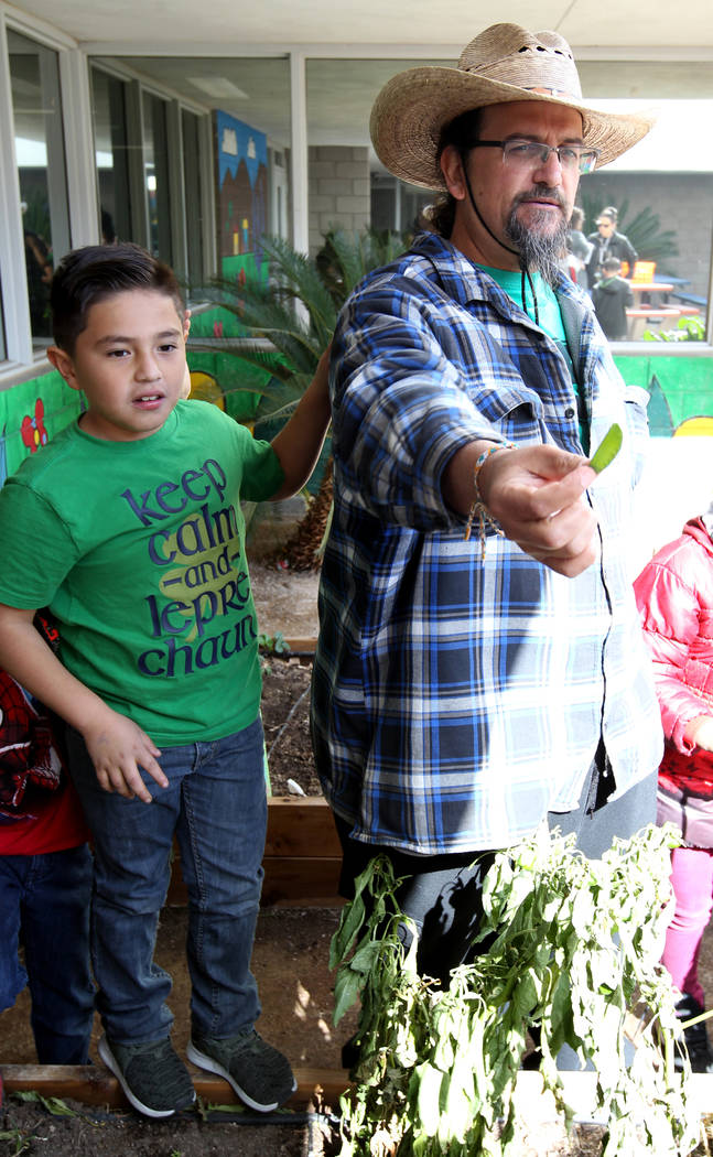 Enrique Garcia with Garden Farms hands out peas to third-grade students at Woolley Elementary School in the Las Vegas school's garden Monday, Feb. 12, 2018. With Garcia is student Aiden Guillermo, ...