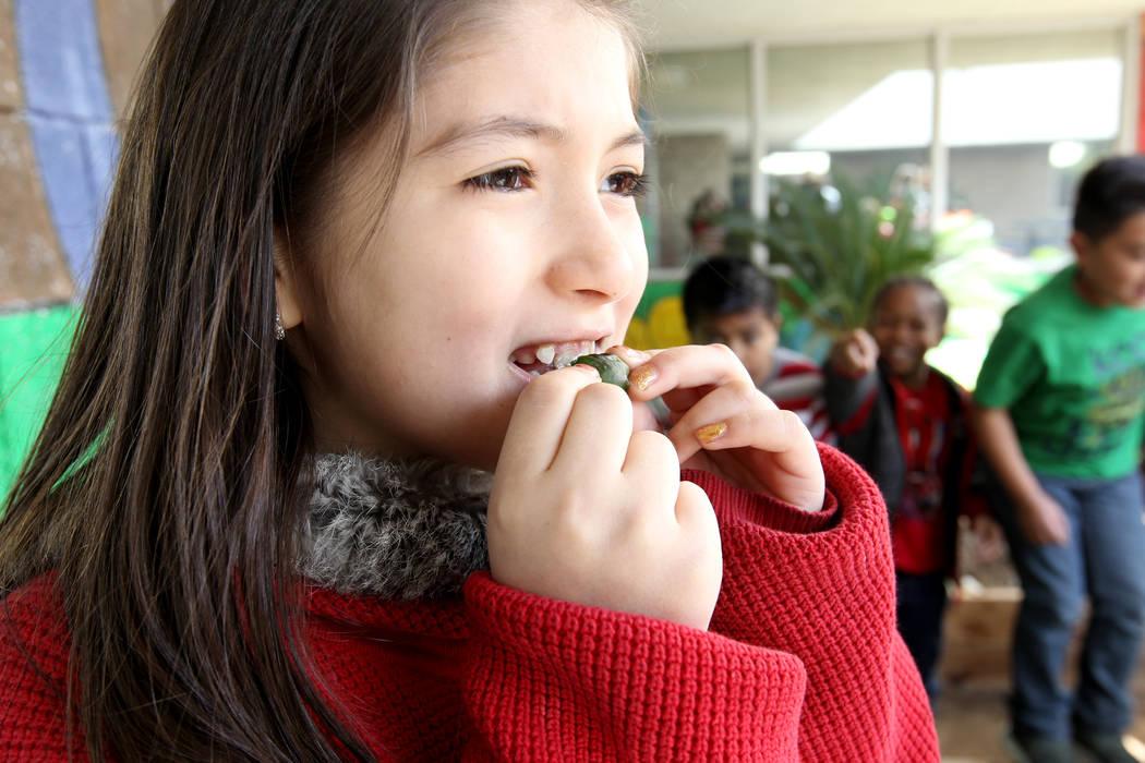 Woolley Elementary School third-grader Jade Lopez eats a tiny bell pepper grown in the Las Vegas school's garden Monday, Feb. 12, 2018. K.M. Cannon Las Vegas Review-Journal @KMCannonPhoto