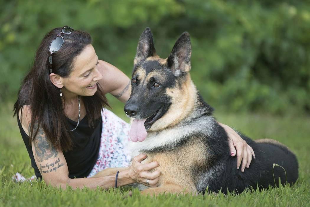 Best Dog Food For German Shepherd Husky Mix