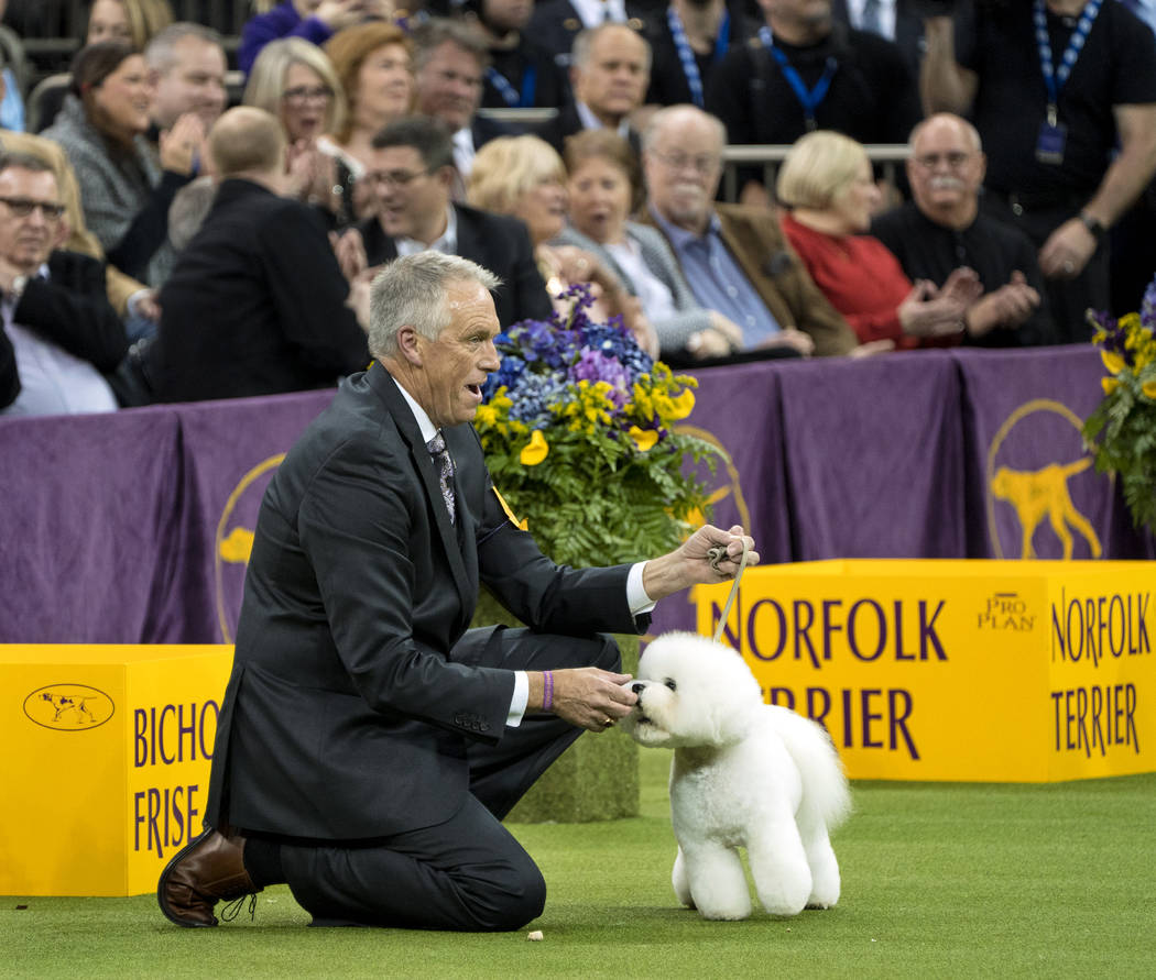 Handler Bill McFadden reacts as Flynn, a bichon frise, is named Best in Show at the 142nd Westminster Kennel Club Dog Show, Tuesday, Feb. 13, 2018, at Madison Square Garden in New York. (AP Photo/ ...