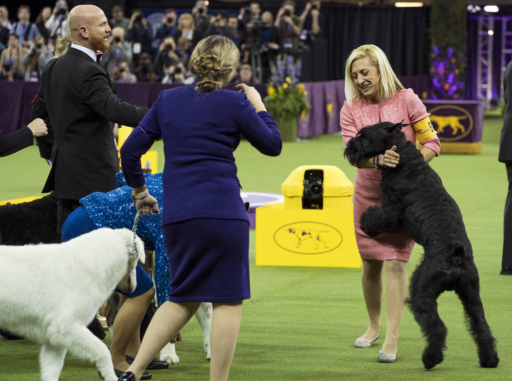 Ty, a Giant Schnauzer, right, is hugged by handler Katie Bernardin after winning the working group during the 142nd Westminster Kennel Club Dog Show, Tuesday, Feb. 13, 2018, at Madison Square Gard ...