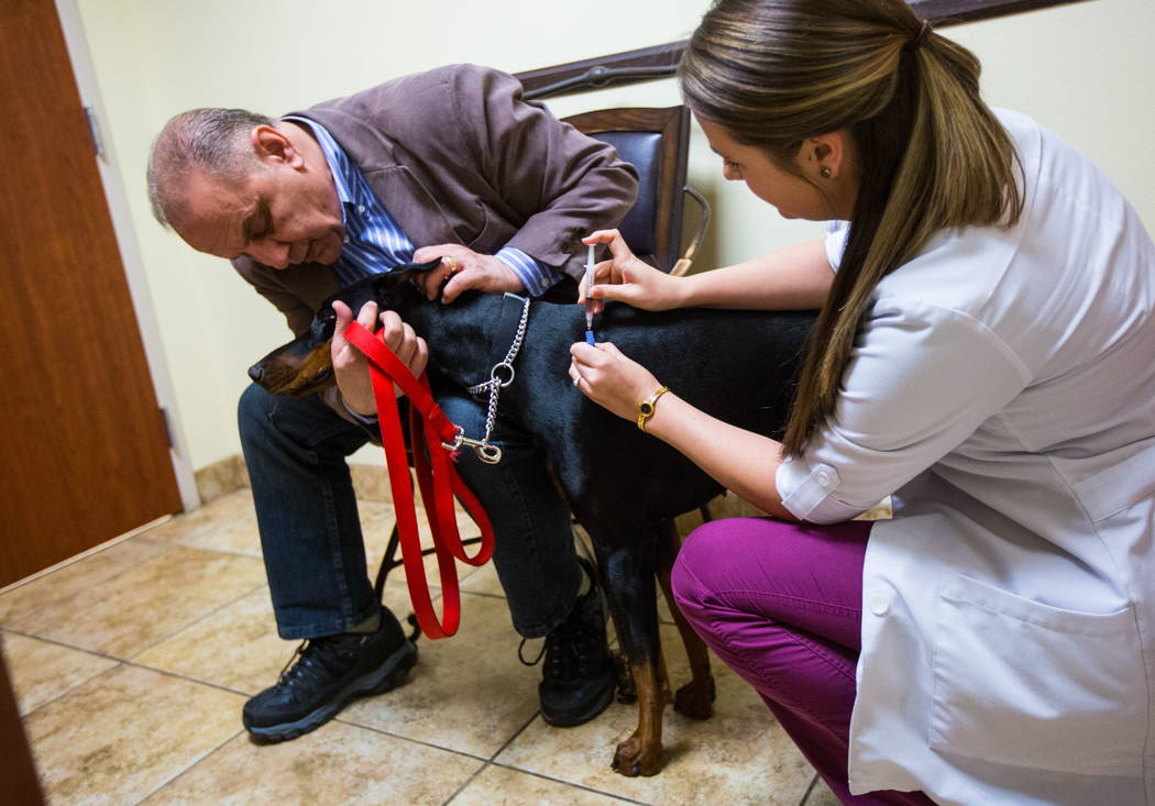 Dr. Brittney Spurling, a veterinarian at Cheyenne West Animal Hospital, gives a flu shot to Harley, a one-year-old Doberman, in Las Vegas on Friday, Feb. 16, 2018.  (Chase Stevens/Las Vegas Review ...