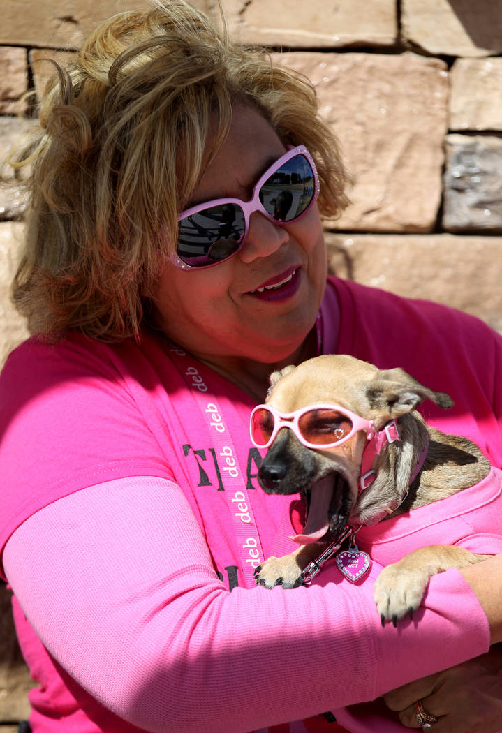 Debbie Wiechecki talks to a reporter while holding her dog Nova at Craig Ranch Regional Park in North Las Vegas Monday, Feb. 19, 2018, about her preparations to climb the Stratosphere Tower. Wiech ...