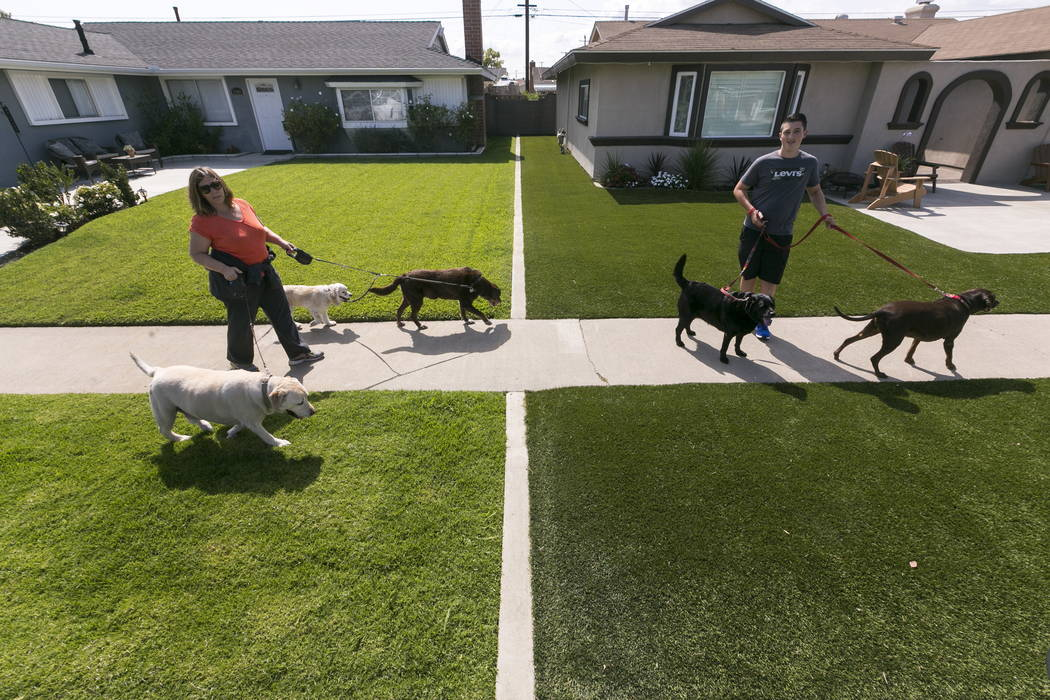 Llocal resident Martha Mattison, left, helps out her son, Jacob with his dog walking business, as they walk past recently installed synthetic grass, seen at right, in Garden Grove, Calif., in 2015 ...