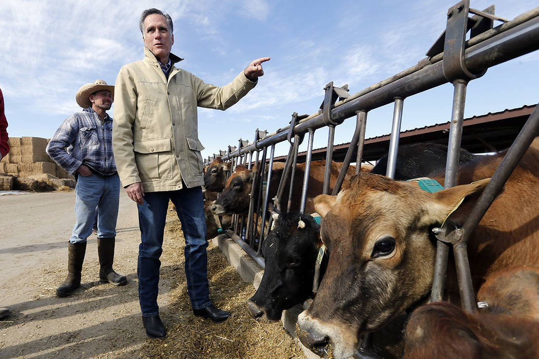 Former Republican presidential candidate Mitt Romney stands near cows during a tour of Gibson's Green Acres Dairy Friday, Feb. 16, 2018, in Ogden, Utah. (AP Photo/Rick Bowmer)