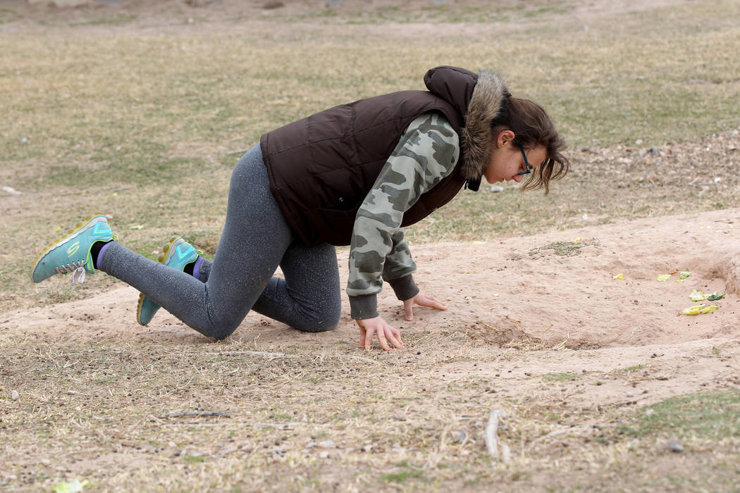 Luna Bermudez, 12, tries to capture rabbits at the State of Nevada West Charleston Campus Monday, Feb. 19, 2018. Rabbit rescue groups say they found many of the hundreds of domestic rabbits who li ...