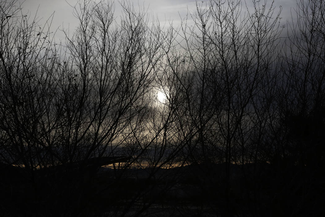 The morning sun pierce through winter trees as seen from 7050 Wetlands Park Lane where a brush fire that started Tuesday evening at Clark County Wetlands Park was finally contained on Wednesday, F ...
