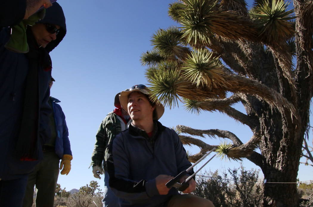 Patrick Baird, biologist from the U.S. Geological Society, shows a trunk measurement to a volunteer near Meadview, Arizona, Tuesday, Feb. 20, 2018. (Henry Brean/Las Vegas Review-Journal)