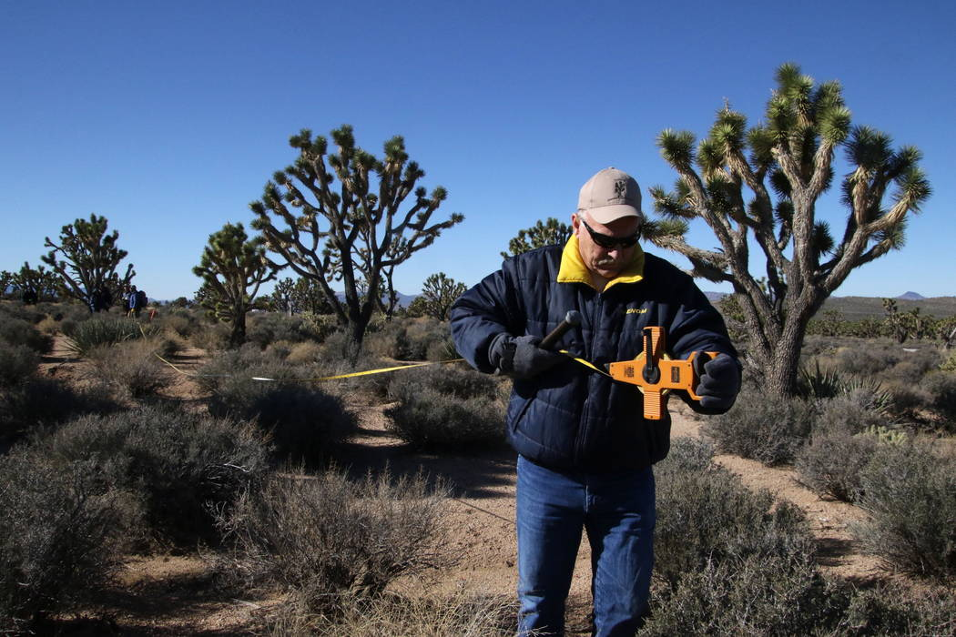 Chuck Steffen, founding member of the the Arizona Friends of the Joshua Tree Forest, measures a scientific plot near Meadview, Arizona, Tuesday, Feb. 20, 2018. (Henry Brean/Las Vegas Review-Journal)