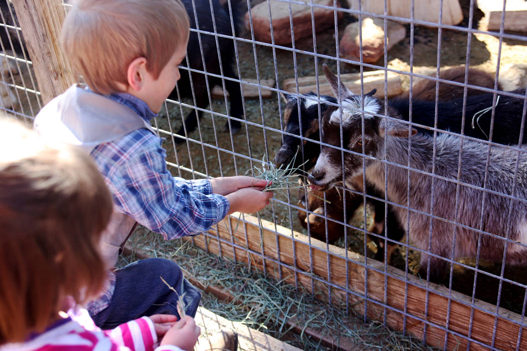 Frankie Lorr, 6, feeds goats with his sister Regina Lorr, 3, at J.R. Pony Farm in Las Vegas, Wednesday, Feb. 28, 2018. The city of Las Vegas wants to annex 872 acres of land that would affect   mo ...