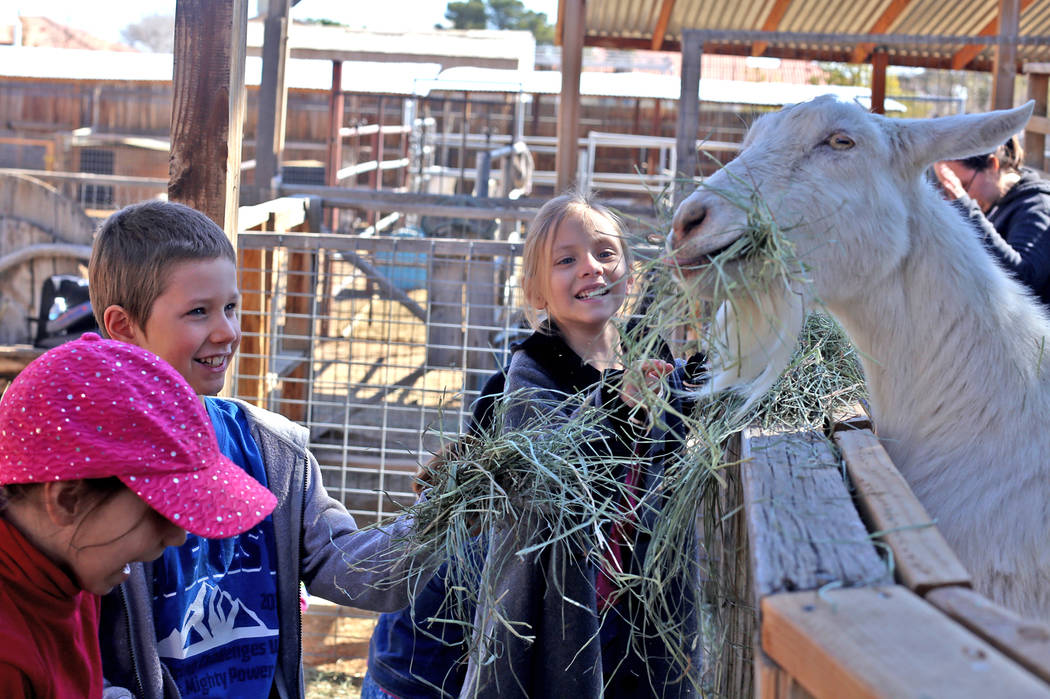 Holly Guthrie, 7, from left, Kenny Lorr, 8, and Therese Guthrie, 5, feed goats at J.R. Pony Farm in Las Vegas, Wednesday, Feb. 28, 2018. The city of Las Vegas wants to annex 872 acres of land that ...