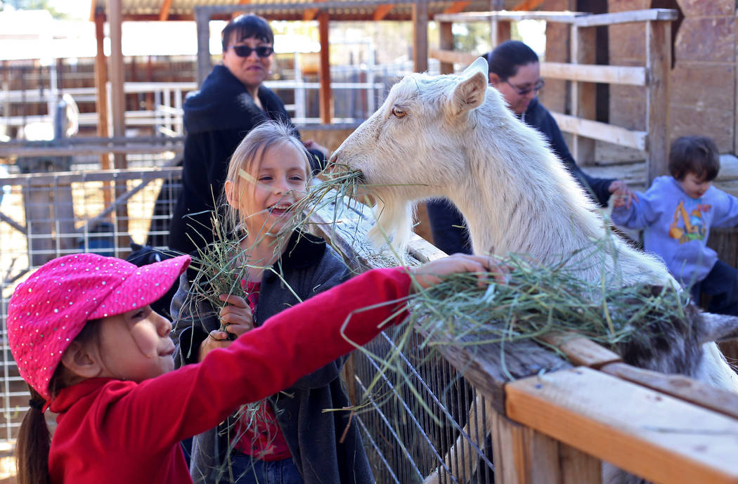 Holly Guthrie, 7, left,  and Therese Guthrie, 5, feed goats at J.R. Pony Farm in Las Vegas, Wednesday, Feb. 28, 2018. The city of Las Vegas wants to annex 872 acres of land that would affect   mor ...