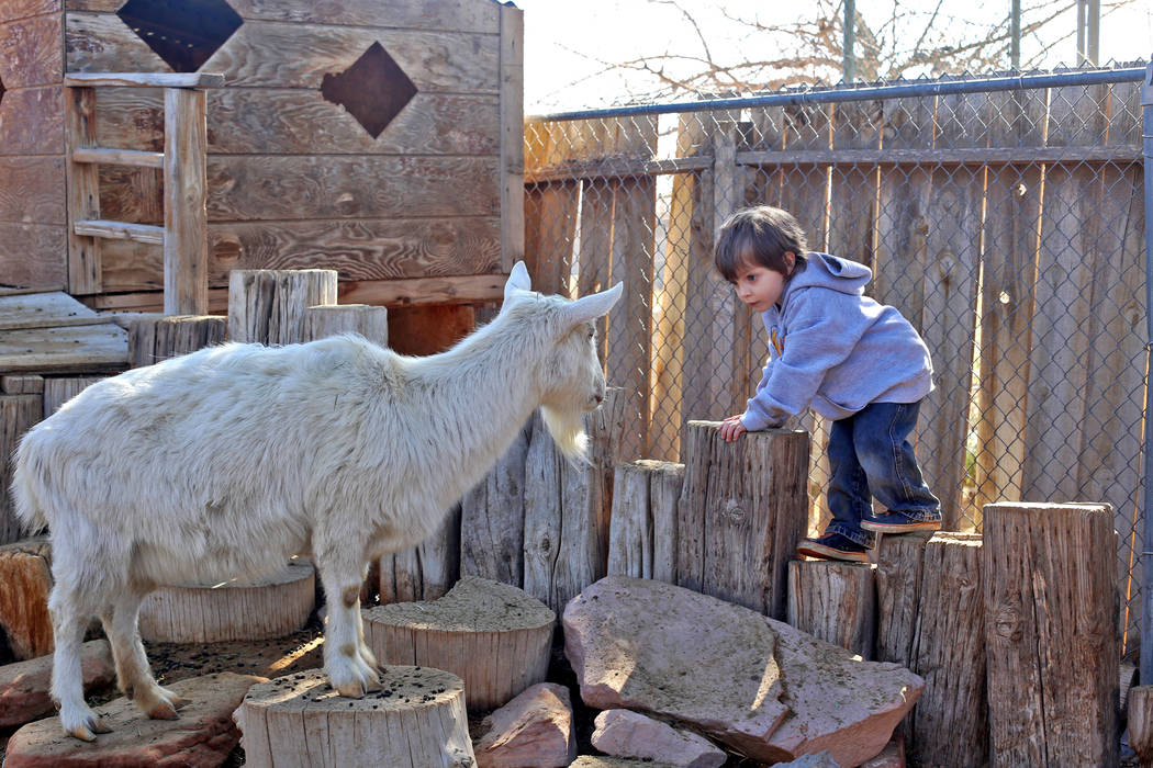 Blaise Henrich, 3, looks eye-to-eye with a goat at J.R. Pony Farm in Las Vegas, Wednesday, Feb. 28, 2018. The city of Las Vegas wants to annex 872 acres of land that would affect   more than 1,500 ...