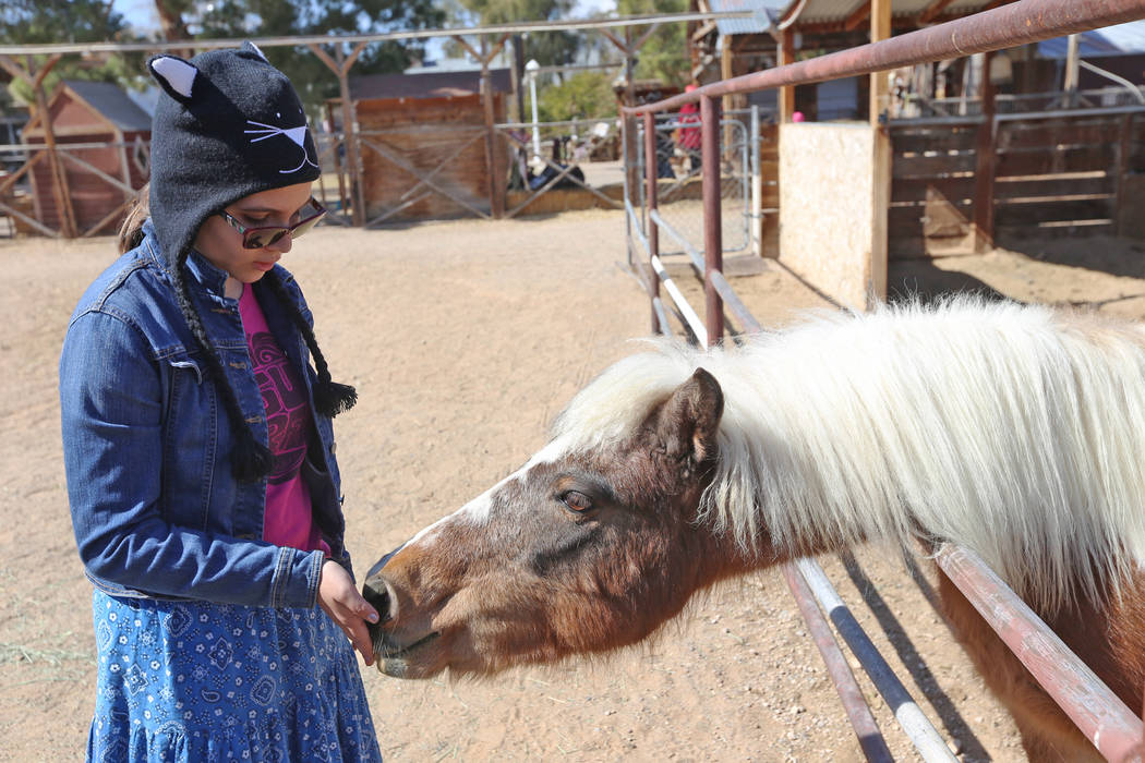 Cristabel Guthrie, 12, feeds a pony a treat at the J.R. Pony Farm in Las Vegas, Wednesday, Feb. 28, 2018. The city of Las Vegas wants to annex 872 acres of land that would affect   more than 1,500 ...
