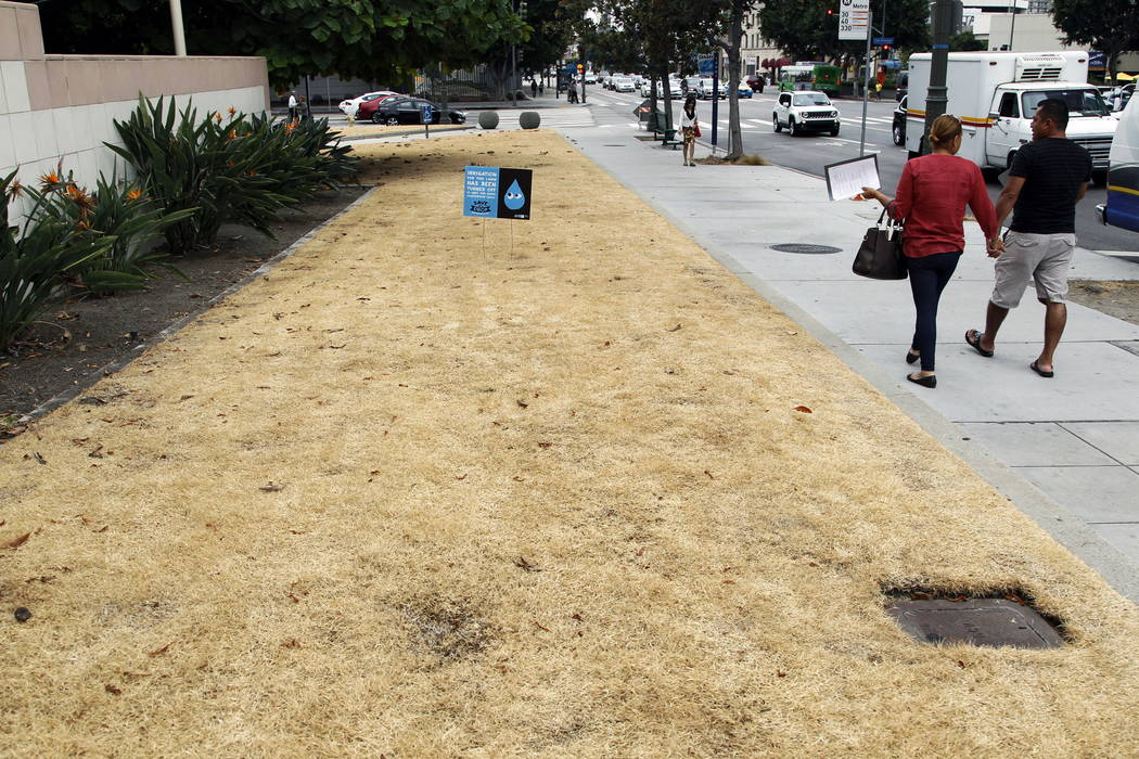 A dried-out lawn is seen at Los Angeles City Hall, with a sign explaining that irrigation has been shut off due to the ongoing drought, in 2015 (AP Photo/Nick Ut, File)