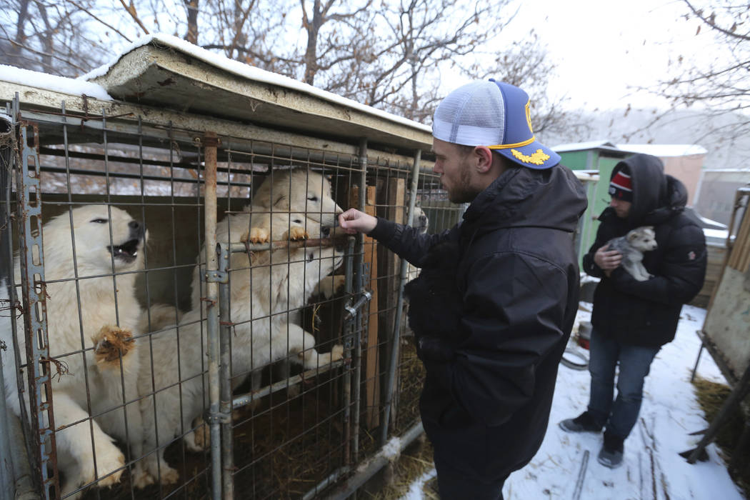 IAmerican freestyle skier Gus Kenworthy, left, and his boyfriend Matthew Wilkas watch dogs in cages at a dog meat farm in Siheung, South Korea, Feb. 23, 2018. (AP Photo/Ahn Young-joon)