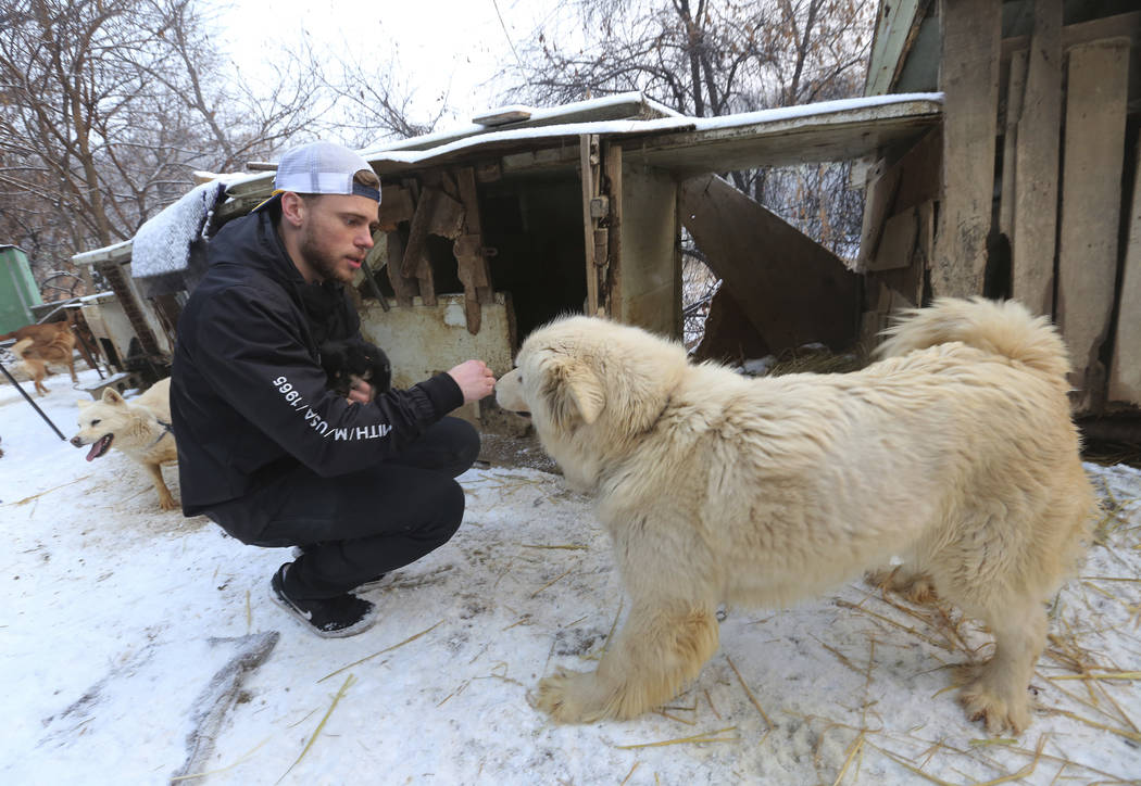American freestyle skier Gus Kenworthy plays with a dog at a dog meat farm in Siheung, South Korea, Feb. 23, 2018. (AP Photo/Ahn Young-joon)