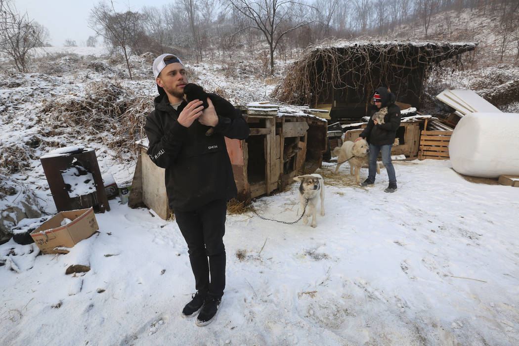 American freestyle skier Gus Kenworthy, left, and his boyfriend Matthew Wilkas visit a dog meat farm in Siheung, South Korea, Feb. 23, 2018. (AP Photo/Ahn Young-joon)