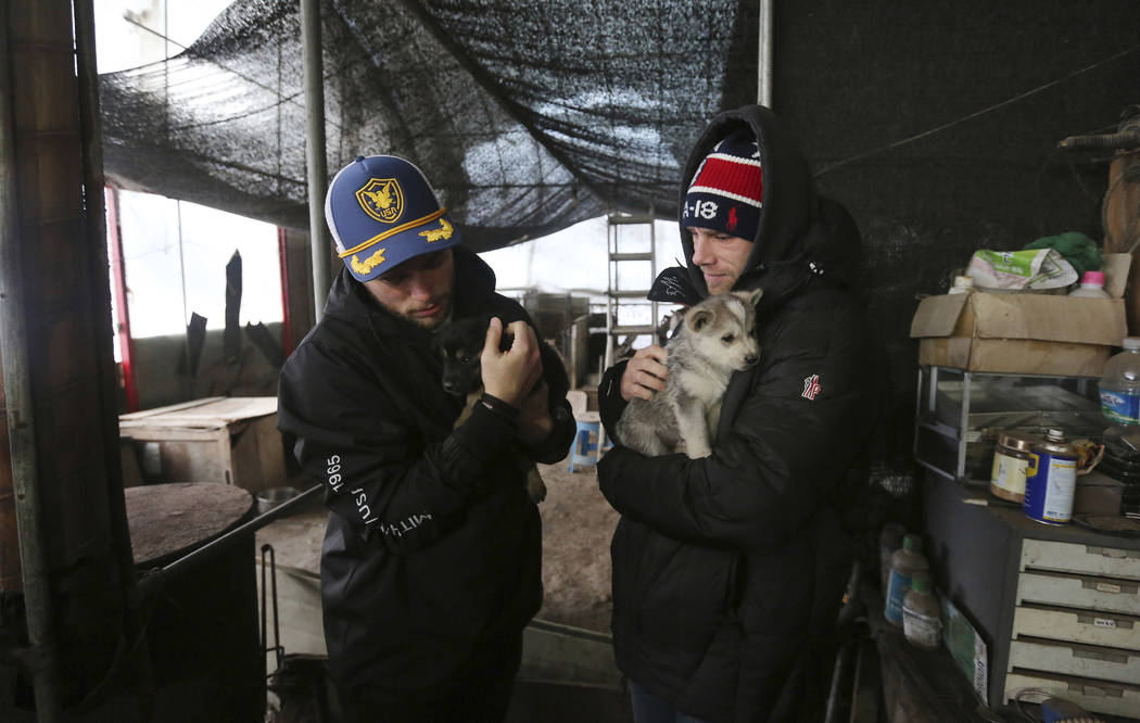 American freestyle skier Gus Kenworthy, left, and his boyfriend Matthew Wilkas hold dogs at a dog meat farm in Siheung, South Korea, Feb. 23, 2018. (AP Photo/Ahn Young-joon)
