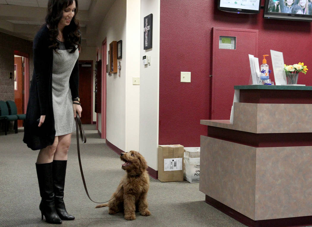 Faith Lutheran Middle School and High School Director of Middle School Guidance Courtney Burns with Esther, a therapy dog in training, at the Las Vegas school Tuesday, Feb. 27, 2018. The 15-week-o ...