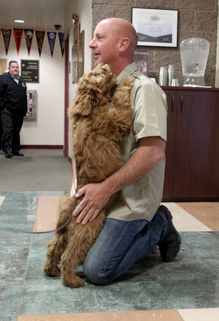 Faith Lutheran Middle School and High School therapy dog in training, Esther, hugs Brad Norton of Norton Dog Training at the Las Vegas school Tuesday, Feb. 27, 2018. Esther, a 15-week-old goldendo ...