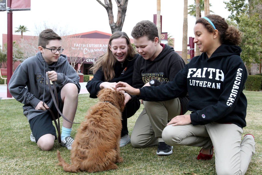 Faith Lutheran Middle School and High School students, from left, Evan Burns, 13, Abby Lescenski, 12, Sam Chalfant, 13, and Kayla Somers, 11, meet Esther, a therapy dog in training, at the Las Veg ...