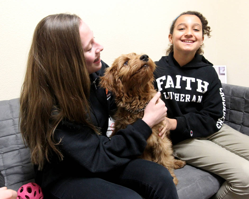 Faith Lutheran Middle School and High School students Abby Lescenski, 12, left, and Kayla Somers, 11, meet Esther, a therapy dog in training, at the Las Vegas school Tuesday, Feb. 27, 2018. The 15 ...