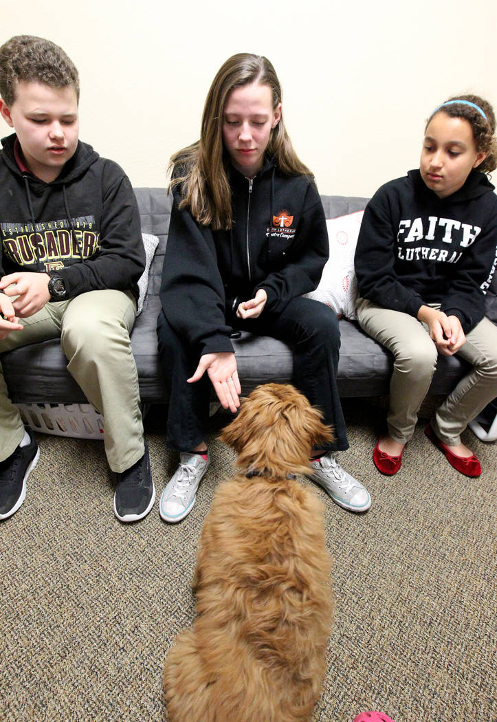 students best friend las vegas school getting therapy With therapy dog training las vegas