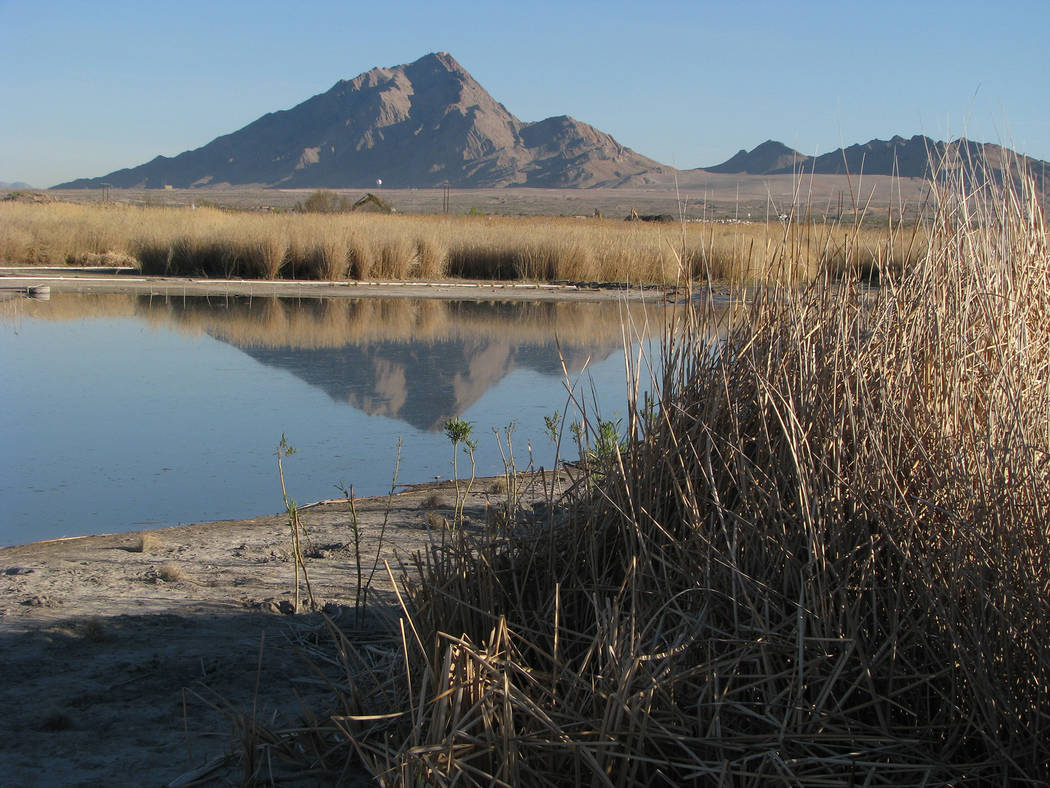 A view of Frenchman Mountain from the Clark County Wetlands Park, 7050 Wetlands Park Lane. The Wetlands are in the unincorporated town of Sunrise Manor. (F. Andrew Taylor/View) @FAndrewTaylorPress
