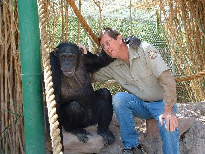 Pat Dingle hangs out with a chimpanzee at his Southern Nevada Zoological-Botantical Park in an undated family photo. Dingle family