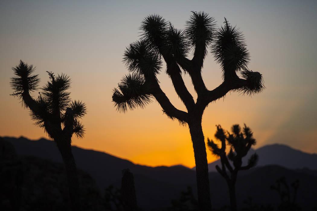 The sun sets at Joshua Tree National Park outside of Twentynine Palms, Calif. on Thursday, Sept. 15, 2016. Chase Stevens/Las Vegas Review-Journal Follow @csstevensphoto