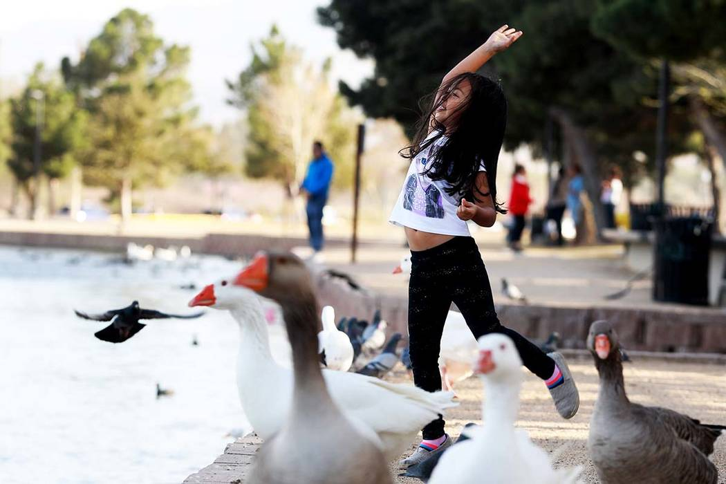 Isabella Andia, 6, feeds the ducks at Sunset Park in Las Vegas on Sunday, Feb. 18, 2018. Andrea Cornejo Las Vegas Review-Journal @DreaCornejo