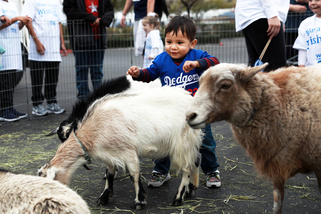 Noah Avitia, 2, pets goats, which were brought in from the Petting Zoo 2 U, LLC, during the Walk for Wishes event at the Town Square in Las Vegas on Saturday, March 10, 2018. The nationwide Make-A ...