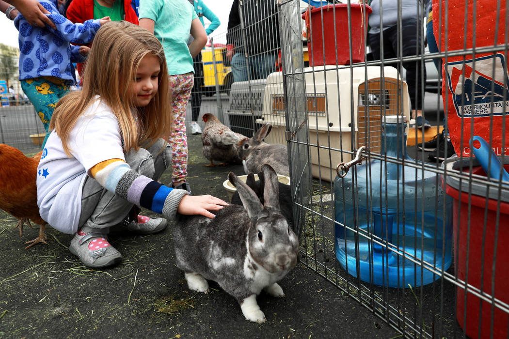 Ava Kalkowski, 5, pets a bunny, which was brought in from the Petting Zoo 2 U, LLC, during the Walk for Wishes event at the Town Square in Las Vegas on Saturday, March 10, 2018. The nationwide Mak ...