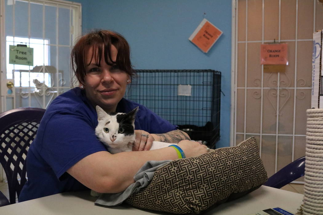 Chevy, a cat up for adoption at the NSPCA and cat intake coordinator Joellynn Chavez, at the shelter at 4800 W. Dewey Dr. in Las Vegas on Monday, March 12, 2018. The NSPCA is competing in an onlin ...